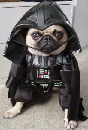 dog_star_war_cosplay