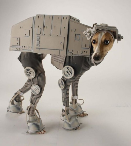 dog cosplay star wars